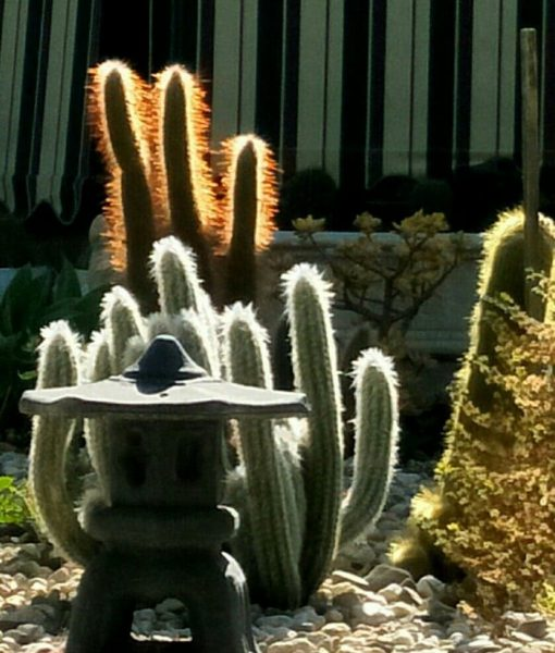 Cactus Creations & Pottery
